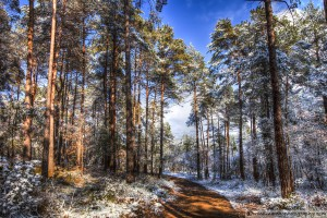 snow-in-the-forest-10