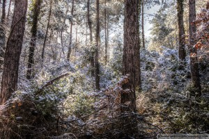 snow-in-the-forest-11