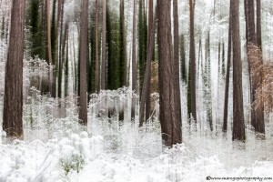 snow-in-the-forest-2