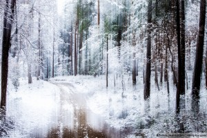 snow-in-the-forest-3