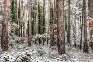 snow-in-the-forest-6