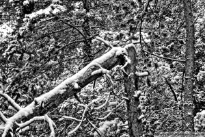 snow-in-the-forest-7