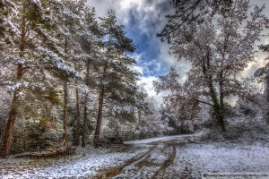 snow-in-the-forest-8