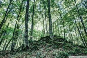 Fageda d'en Jordà (The Jordan's beech wood, Catalonia)