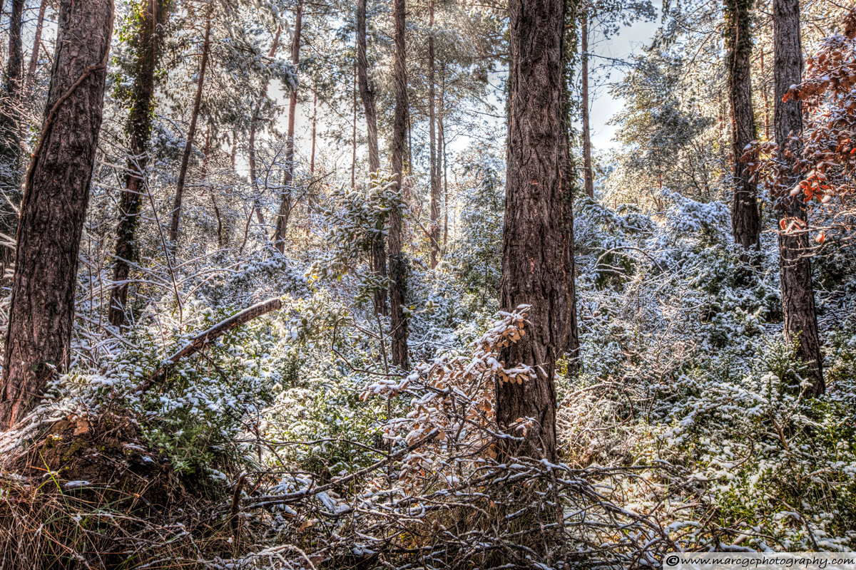 Raining Snow in the Forest