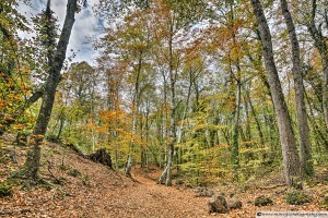 Walking Throw Jordan's Beech Wood