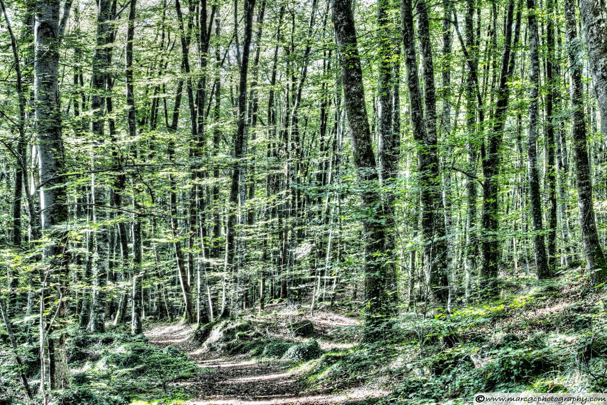 Light Between Trees (Jordan's Beech Wood)