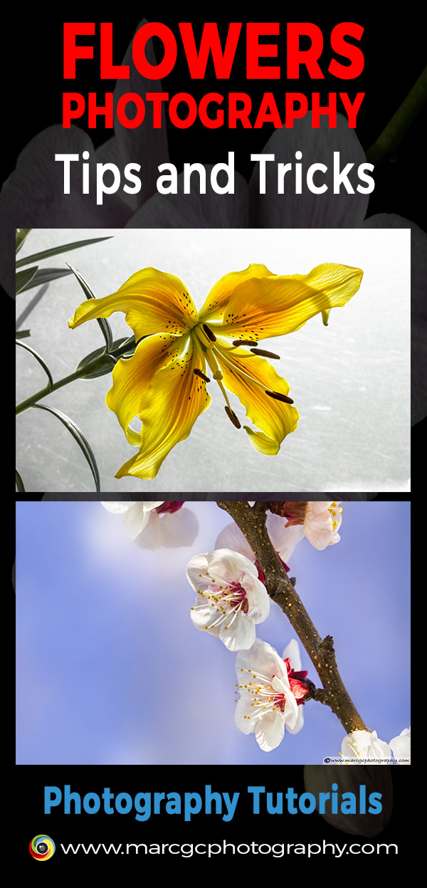 This tutorial will guide you to capturing the best flower photos on location or in the studio.