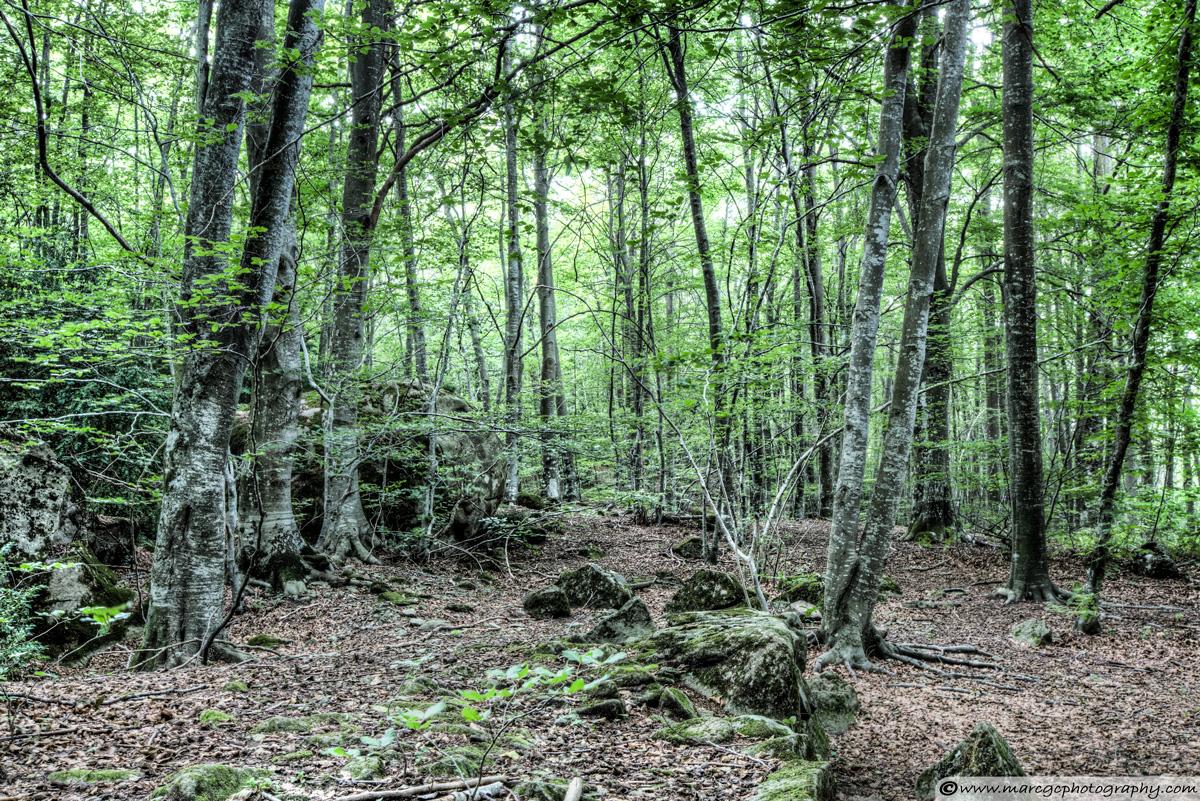 The Enchanted Rocks II (Catalonia)