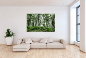A Summer Day in the Forest - Metal Print by Marc G.C. Photography