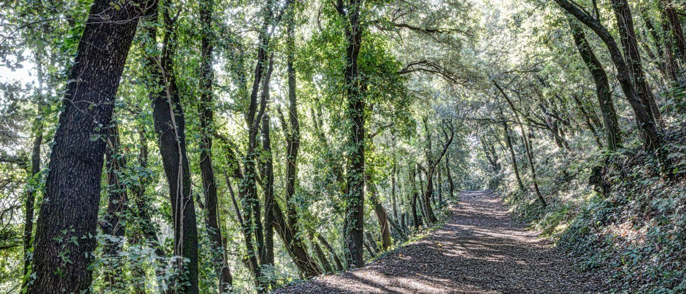 Path Between Trees (Santa Pau, Catalonia)