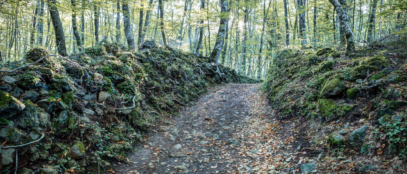 Walking Between Rocks and Trees