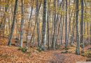 Autumn at La Fageda d'en Jordà