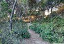 El Bosc de la Marquesa (Tarragona, Catalonia)