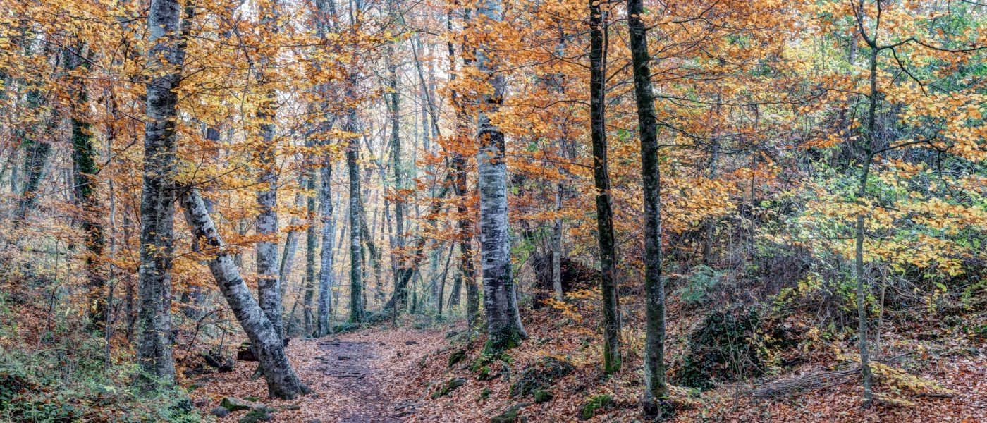 Looking for The Right Path (Fageda d'en Jordà, Catalonia)